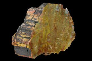 "Buy 7.1"" Colorful, Polished Petrified Wood (Araucarioxylon) - Arizona - #147922"