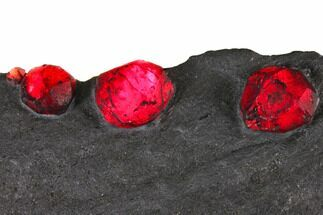 "Buy 7.6"" Plate of Eight Red Embers Garnet in Graphite - Massachusetts - #148177"
