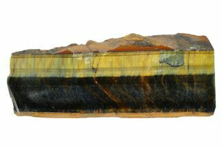 "Buy 5.2"" Polished Tiger's Eye Section - South Africa - #148294"