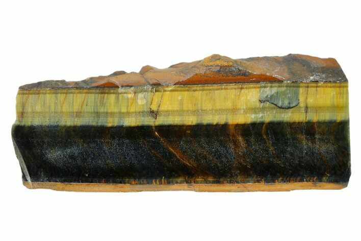 "5.2"" Polished Tiger's Eye Section - South Africa"