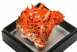 "1.4"" Bright Orange Crocoite Crystal Cluster - Tasmania - #148496-1"
