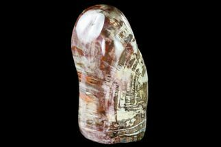 "Buy 10.7"" Tall, Free-Standing, Polished Petrified Wood - Madagascar - #148723"