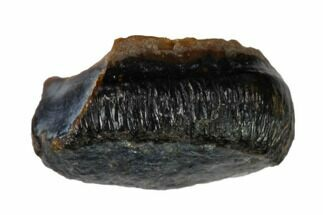 Brachychampsa sp. - Fossils For Sale - #148821
