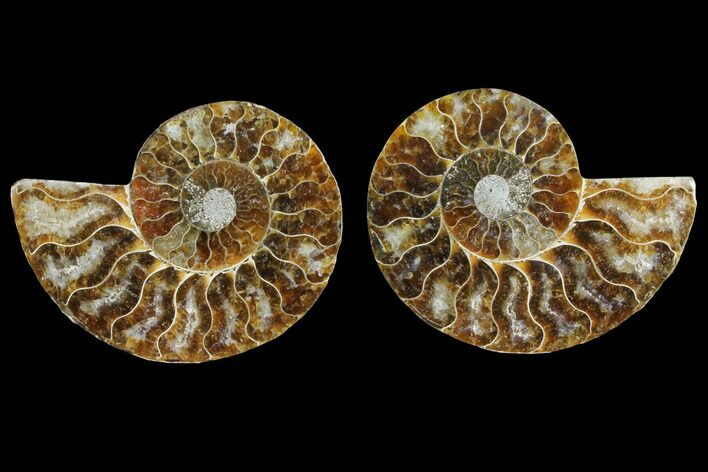 "3.3"" Agate Replaced Ammonite Fossil (Pair) - Madagascar"