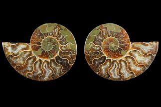 "3.1"" Agate Replaced Ammonite Fossil (Pair) - Madagascar For Sale, #145829"