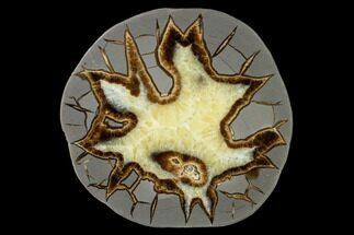 "5.3"" Polished Septarian Slab - Utah For Sale, #150044"