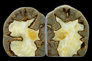 Septarian - Fossils For Sale - #149919
