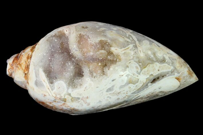 "1.87"" Chalcedony Replaced Gastropod With Druzy Quartz - India"