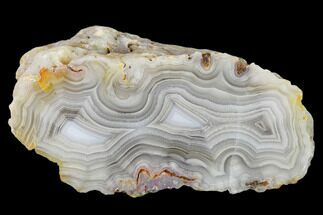 "Buy 3.1"" Polished Calandria Agate Nodule Half - Mexico - #150541"