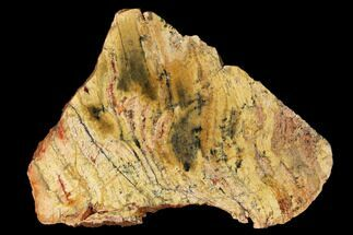 Strelley Pool Stromatolite - Fossils For Sale - #150669