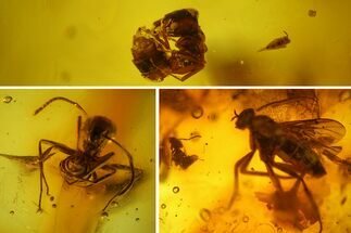 Detailed Fossil Ants, a Fly and a Springtail In Baltic Amber For Sale, #150713
