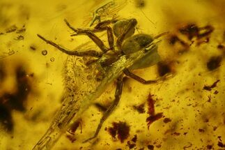 Fossil Fly (Diptera) and a Spider (Araneae) In Baltic Amber For Sale, #150722