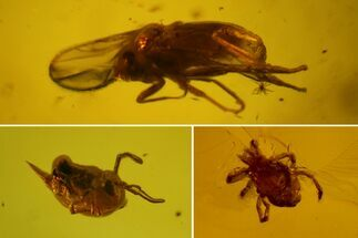 Fossil Fly, Mite and Springtail Association in Baltic Amber For Sale, #150758