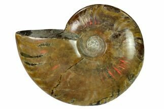 "Buy 2.8"" Red Flash Ammonite Fossil - Madagascar - #151726"