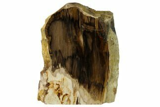 "5.7"" Polished, Petrified Dawn Redwood Stand Up - Oregon For Sale, #152399"