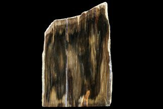 "Buy 4.85"" Polished, Petrified Dawn Redwood Stand Up - Oregon - #152386"