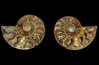 "Buy 2.9"" Agatized Ammonite Fossil (Pair) - Madagascar - #145978"