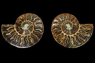 "Buy 3.25"" Agatized Ammonite Fossil (Pair) - Madagascar - #145981"