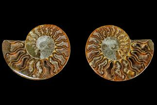 "Buy 2.7"" Agatized Ammonite Fossil (Pair) - Crystal Filled Chambers - #145984"