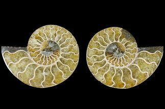 "Buy 3.15"" Agate Replaced Ammonite Fossil (Pair) - Madagascar - #145912"