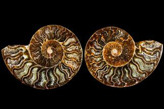 "3.1"" Agatized Ammonite Fossil (Pair) - Madagascar For Sale, #145967"