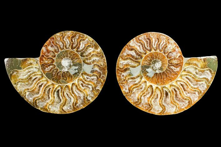 "3.15"" Agate Replaced Ammonite Fossil (Pair) - Madagascar"