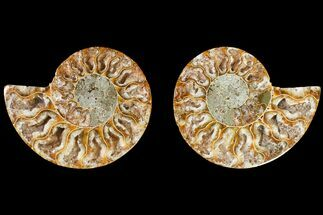 "Buy 3"" Agatized Ammonite Fossil (Pair) - Crystal Filled Chambers - #145903"