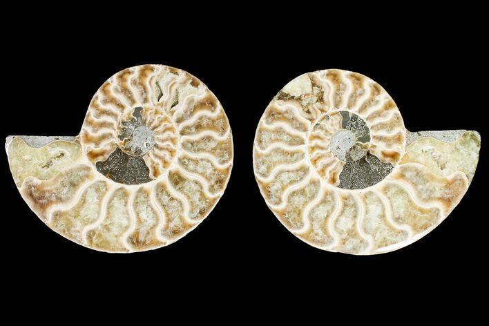 "3.2"" Agatized Ammonite Fossil (Pair) - Madagascar"