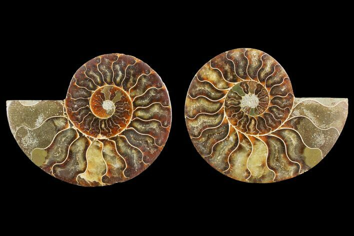 "4.1"" Agate Replaced Ammonite Fossil (Pair) - Madagascar"