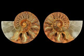 "4.7"" Agate Replaced Ammonite Fossil (Pair) - Madagascar For Sale, #150908"