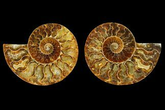 "2.75"" Agatized Ammonite Fossil (Pair) - Madagascar For Sale, #145952"