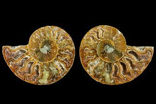 "Buy 2.7"" Agatized Ammonite Fossil (Pair) - Crystal Filled Chambers - #145987"