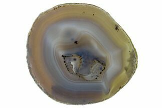 "Buy 6"" Polished Brazilian Agate Slice - #156001"