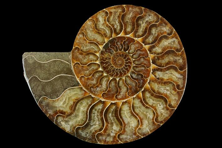 "6.9"" Cut & Polished Ammonite Fossil (Half) - Madagascar"