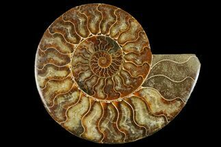 "Buy 6.9"" Cut & Polished Ammonite Fossil (Half) - Madagascar - #158026"