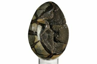 Septarian with Calcite - Fossils For Sale - #157869