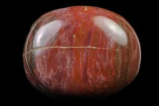 "Buy 2.15"" Polished Petrified Wood (Araucaria) - Madagascar  - #158650"