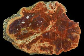 "Buy 17.5"" Vibrant, Polished Petrified Wood Round - Arizona - #158905"