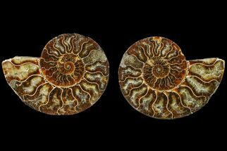 "Buy Bargain, 5"" Agate Replaced Ammonite Fossil (Pair) - Madagascar - #158326"