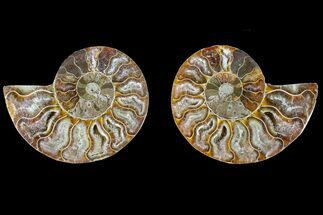"2.7"" Agatized Ammonite Fossil (Pair) - Crystal Filled Chambers For Sale, #145997"