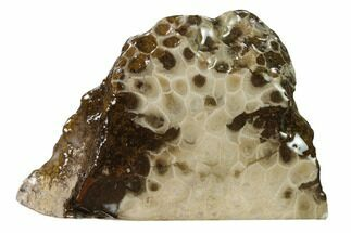 "4.2"" Free-Standing, Petoskey Stone (Fossil Coral) Section - Michigan For Sale, #160265"