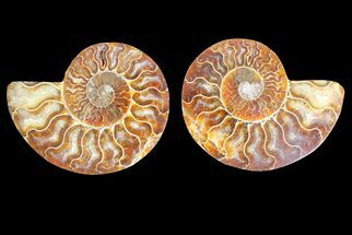"Buy 3.3"" Agate Replaced Ammonite Fossil (Pair) - Madagascar - #145918"