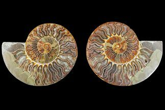 "4.9"" Agate Replaced Ammonite Fossil (Pair) - Madagascar For Sale, #150920"