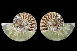 "Bargain, 5.1"" Cut & Polished Ammonite Fossil (Pair) - Madagascar For Sale, #148019"
