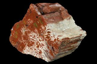 "Buy 5.8"" Polished, Petrified Wood (Araucarioxylon) - Arizona - #165988"