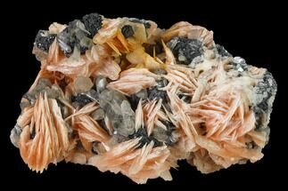 "2.5"" Cerussite Crystals with Bladed Barite on Galena - Morocco For Sale, #165728"