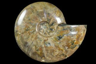 "8.7"" Polished Ammonite Fossil - Madagascar For Sale, #166688"