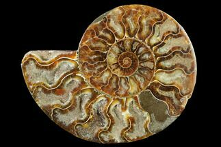Cleoniceras - Fossils For Sale - #166812