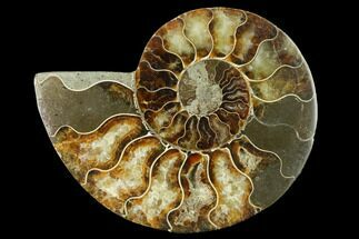 "5"" Cut & Polished Ammonite Fossil (Half) - Madagascar For Sale, #166838"