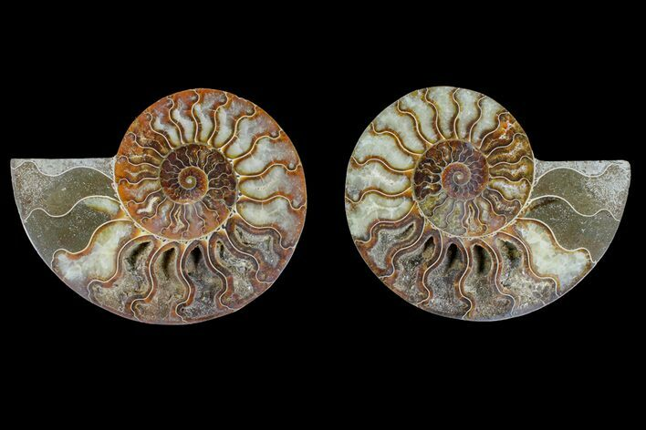 "5.6"" Agate Replaced Ammonite Fossil (Pair) - Madagascar"